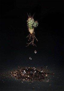 1454593803_SMET_DO__AN__Cactus__2012_Autos_Series_C_Print_120x90_cm