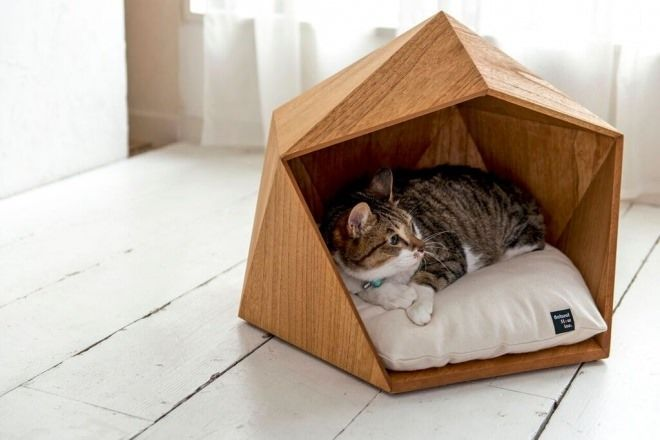 en-iyi-kedi-evleri-emlaklobisi